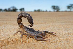 ¿Qué significa soñar con un escorpión?