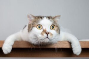 ¿Qué significa soñar con un gato?