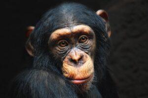 ¿Qué significa soñar con mono?