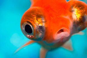 ¿Qué significa soñar con peces?
