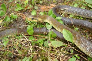 ¿Qué significa soñar con serpiente?